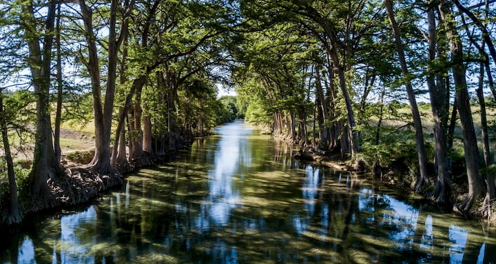 cyprus trees lining the banks of the Medina River in Texas