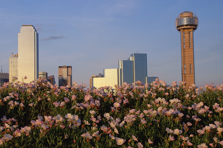 a view of dallas with spring flowers in the foreground