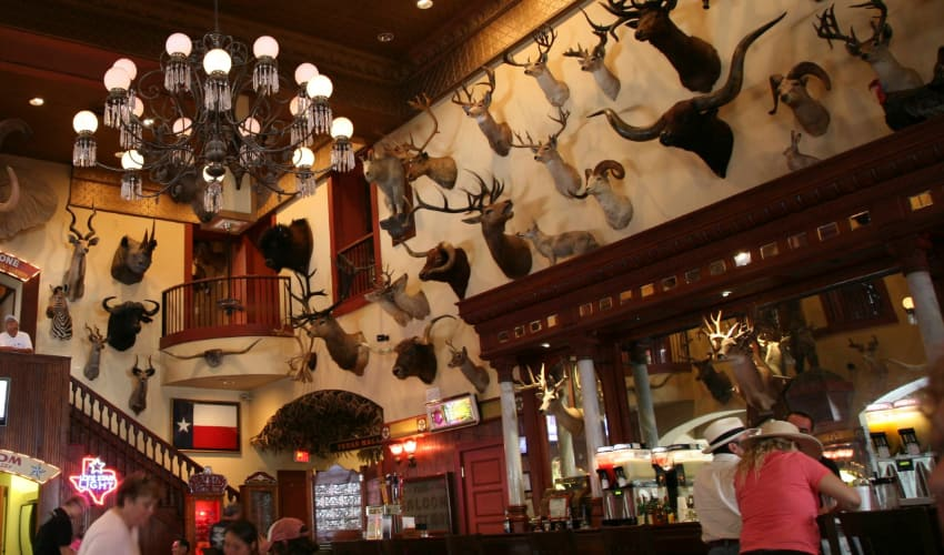 Patrons sip drinks under a wall full of taxidermy heads at the Buckhorn Saloon