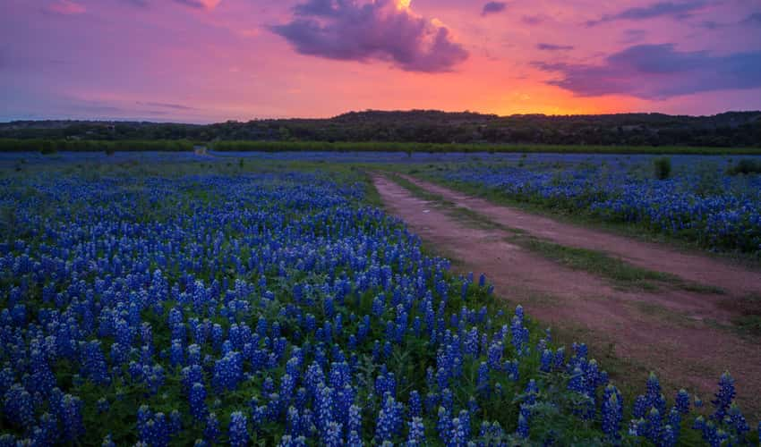 Texas Hill Country with wildflowers during sunset