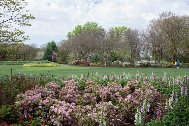Flowers at Dallas Arboretum and Botanical Garden