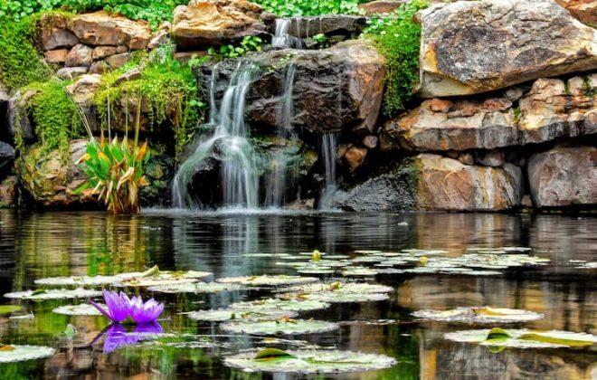 Dallas Arboretum lily pond