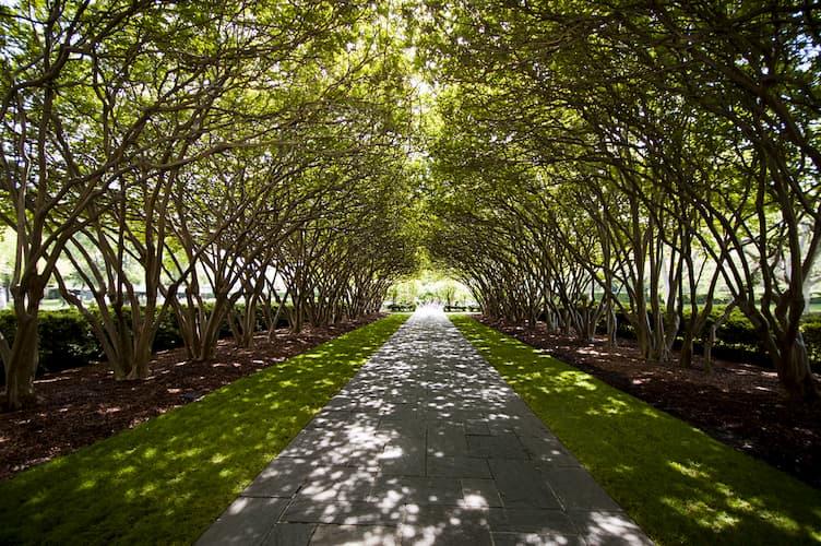 Dallas Arboretum shaded walkway