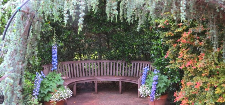 a bench surrounded by greenery at the dallas arboretum and botanical garden